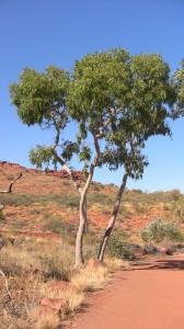 Tree at King's Canyon
